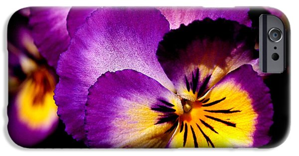 Pansy iPhone Cases - Pansies iPhone Case by Rona Black