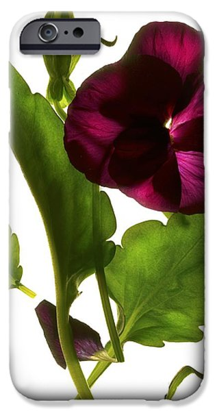Pansy iPhone Cases - Pansy Purple iPhone Case by Julia McLemore