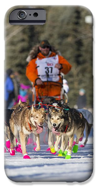 Sled Dog iPhone Cases - Panting Leaders iPhone Case by Tim Grams