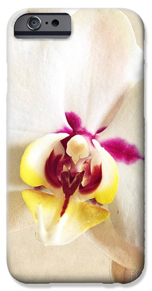 Nature Study iPhone Cases - Paper White Orchid iPhone Case by Ella Kaye Dickey