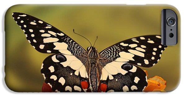 Cut-outs iPhone Cases - Papilio demoleus iPhone Case by Ludek Sagi Lukac