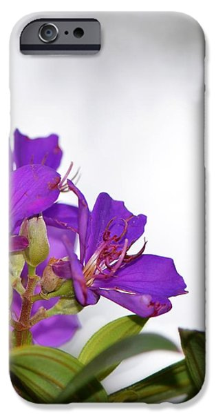 Stretched Canvas iPhone Cases - Paradise Found - Floral Photography By Sharon Cummings iPhone Case by Sharon Cummings