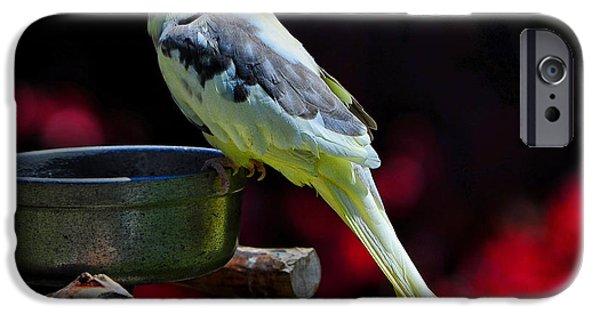 Parakeet iPhone Cases - Parakeet Bird iPhone Case by Peter Dang