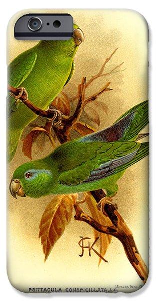 Parakeet iPhone Cases - Parakeet iPhone Case by J G Keulemans