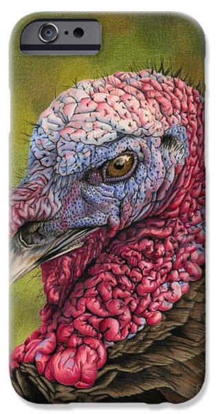Wild Turkey iPhone Cases - Pardon Me? iPhone Case by Sarah Batalka