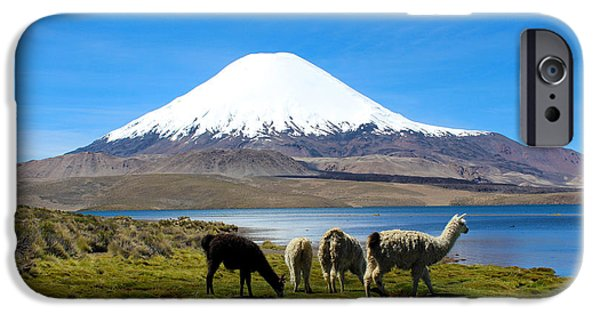 Llama iPhone Cases - Parinacota Volcano Lake Chungara Chile iPhone Case by Kurt Van Wagner