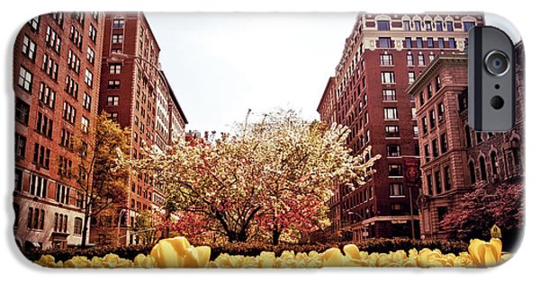 Cherry Blossoms iPhone Cases - Park Avenue in the Spring  iPhone Case by Vivienne Gucwa