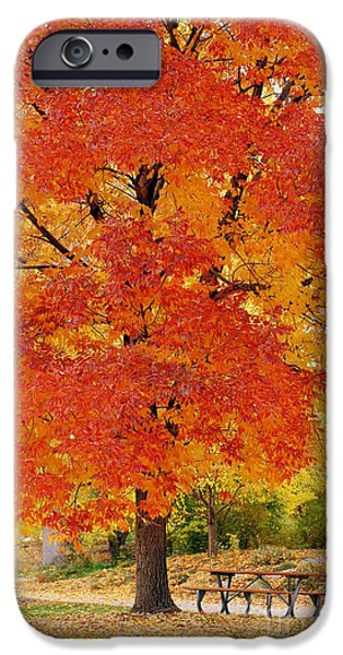 No People Pyrography iPhone Cases - Park in fall iPhone Case by Yoshiko Wootten