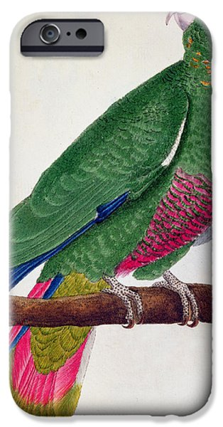 Ornithology iPhone Cases - Parrot iPhone Case by Francois Nicolas Martinet