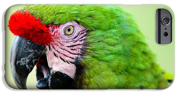Zoo iPhone Cases - Parrot iPhone Case by Sebastian Musial