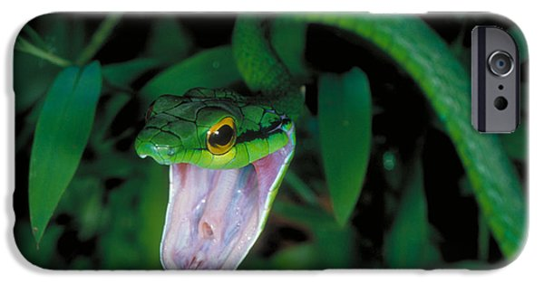 Snake iPhone Cases - Parrot Snake iPhone Case by Gregory G. Dimijian