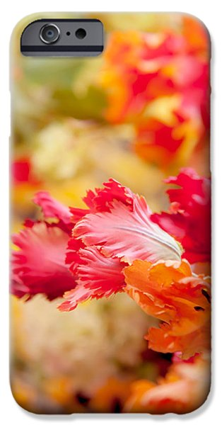 Flower Design Photographs iPhone Cases - Parrot Tulips 1. Amsterdam Flower Market iPhone Case by Jenny Rainbow