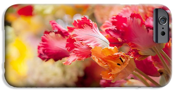Flower Design Photographs iPhone Cases - Parrot Tulips. Amstedam Flower Market iPhone Case by Jenny Rainbow