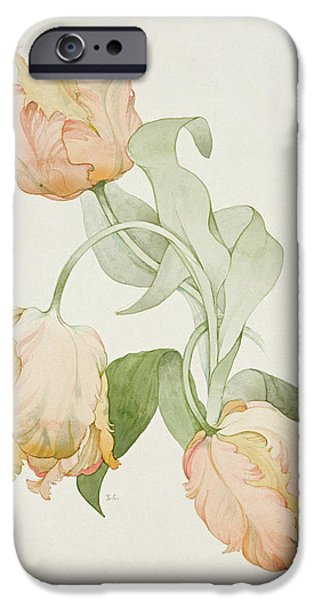 Botanical Photographs iPhone Cases - Parrot Tulips iPhone Case by Sarah Creswell