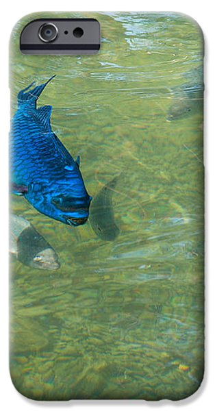 Parrotfish on a Swim iPhone Case by John Bailey