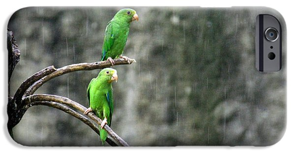 Rainy Day iPhone Cases - Parrots in the Rain iPhone Case by Bob Hislop