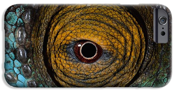 Chameleon iPhone Cases - Parsons Chameleon Eye iPhone Case by Martin Harvey