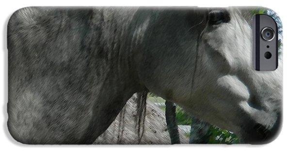 Paso Fino Stallion iPhone Cases - Paso Fino Stallion Portrait iPhone Case by George Pedro
