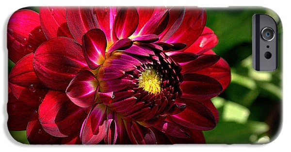 Snake iPhone Cases - Passionate Dahlia iPhone Case by Roger Reeves  and Terrie Heslop