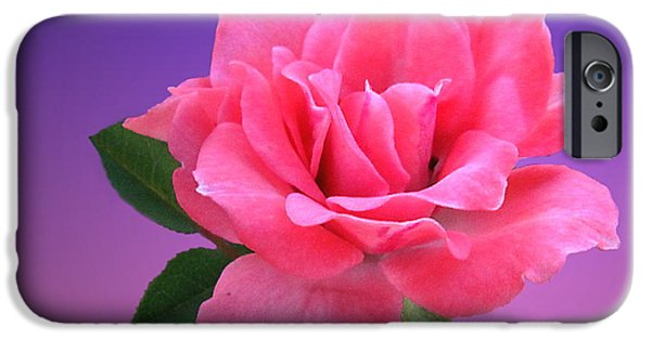 Artography iPhone Cases - Passionate Pink iPhone Case by Joyce Dickens