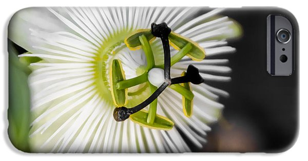 Passionflower iPhone Cases - Passionflower iPhone Case by Photographic Art by Russel Ray Photos
