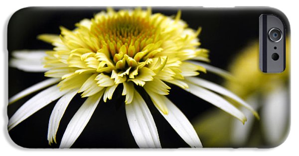 Cone Flower iPhone Cases - Past and Present iPhone Case by Jessica Jenney