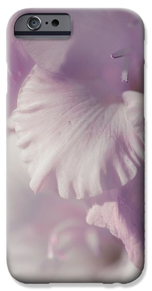 Pleasure iPhone Cases - Pastel Gladiolus iPhone Case by Jenny Rainbow