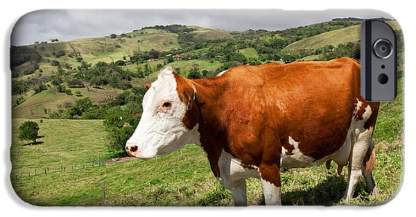 Fed iPhone Cases - Pasture Perfect iPhone Case by Susan  Degginger