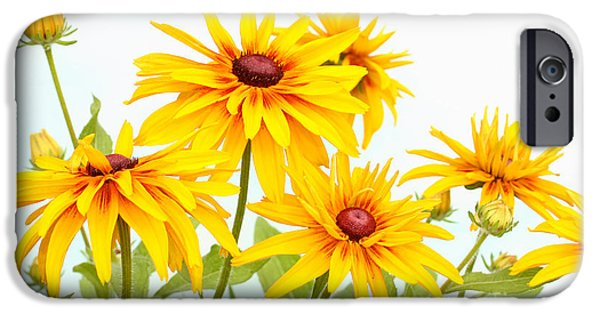 Recently Sold -  - Floral Photographs iPhone Cases - Patch of Black-eyed Susan iPhone Case by Steve Augustin