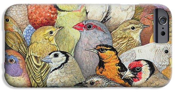 Birds iPhone Cases - Patchwork Birds iPhone Case by Ditz