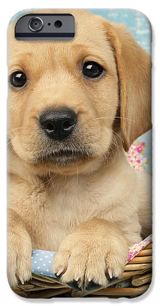 Patchwork Puppy DP793 iPhone Case by Greg Cuddiford