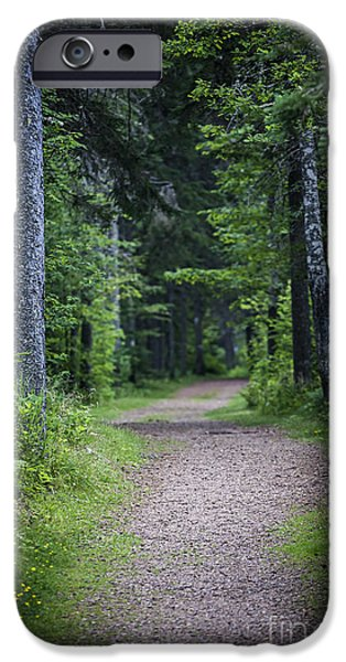 Path in dark forest iPhone Case by Elena Elisseeva