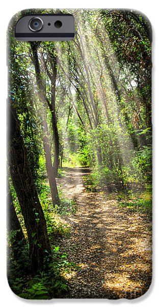 Forest iPhone Cases - Path in sunlit forest iPhone Case by Elena Elisseeva