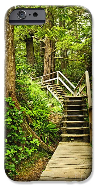 Wooden Stairs iPhone Cases - Path in temperate rainforest iPhone Case by Elena Elisseeva