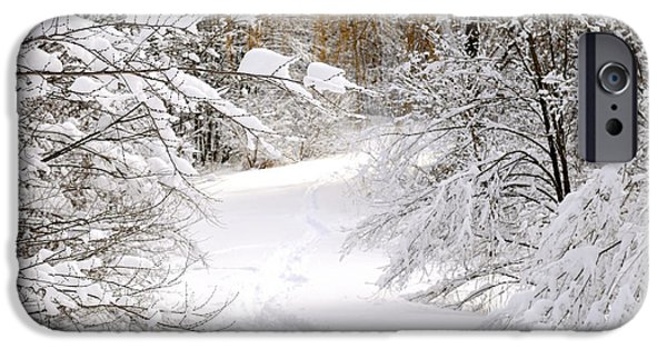 Snow Scene iPhone Cases - Path in winter forest iPhone Case by Elena Elisseeva