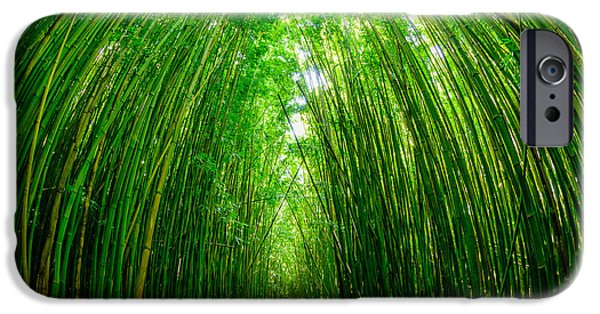 United iPhone Cases - Path through a bamboo forrest on Maui Hawaii USA iPhone Case by Don Landwehrle