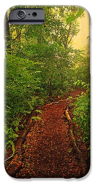 Walking Beat iPhone Cases - Path through Forest iPhone Case by Maggie Vlazny