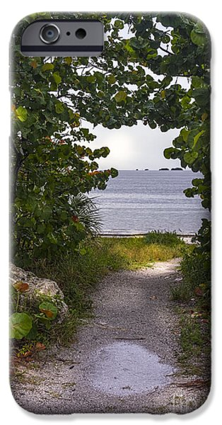 Sea Shells iPhone Cases - Path through the Sea Grapes iPhone Case by Marvin Spates
