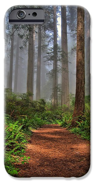 Mist iPhone Cases - Path Thru the Redwoods iPhone Case by Michael  Ayers