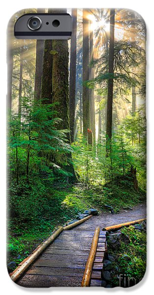 Best Sellers -  - Pathway iPhone Cases - Pathway into the Light iPhone Case by Inge Johnsson
