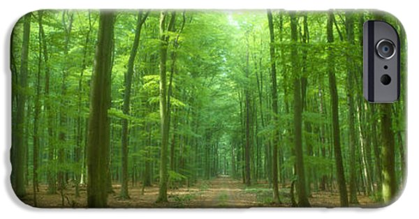Pathway iPhone Cases - Pathway Through Forest, Mastatten iPhone Case by Panoramic Images