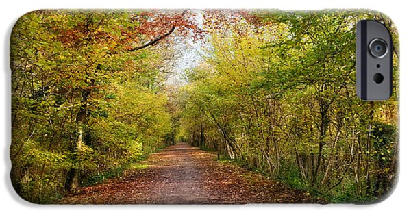 Nature Study iPhone Cases - Pathway through Sunlit Autumn Woodland Trees iPhone Case by Natalie Kinnear