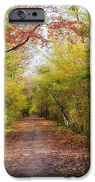 Pathway through Sunlit Autumn Woodland Trees iPhone Case by Natalie Kinnear