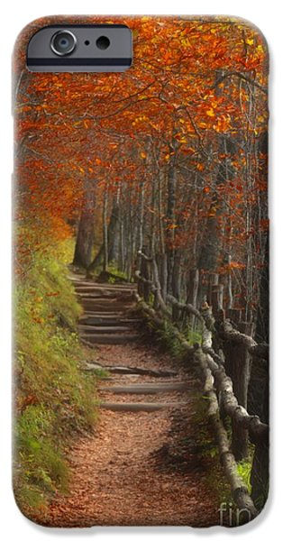 Split Rail Fence iPhone Cases - Pathway to Autumn iPhone Case by Benanne Stiens