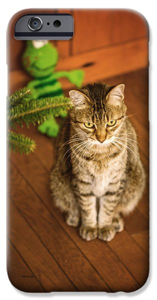 American Shorthair iPhone Cases - Patience iPhone Case by Anita Miller
