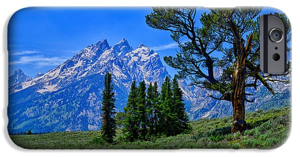 Patriarch iPhone Cases - Patriarch Tree iPhone Case by Greg Norrell