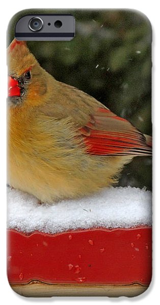 Patriotic Cardinal iPhone Case by Mary Williamson