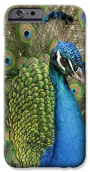 Meadow Pyrography iPhone Cases - Pavo cristatus iPhone Case by Alicia Gonzalez