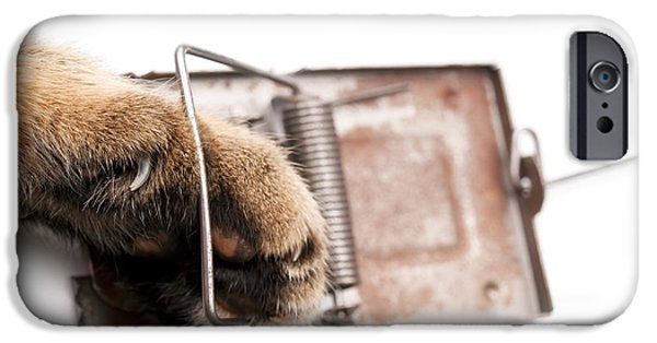 Fault iPhone Cases - Paw in mousetrap iPhone Case by Sinisa Botas