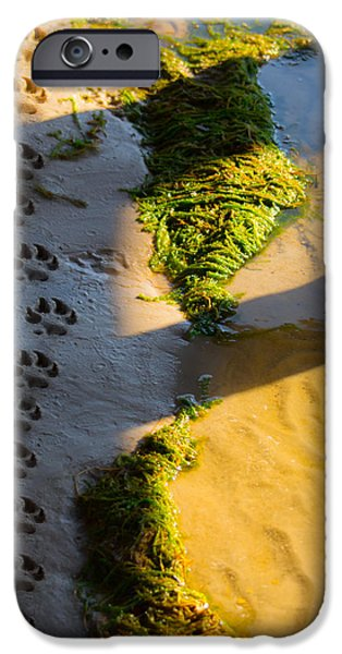 Puppy Love Greeting Cards iPhone Cases - Pawprints In The Sand iPhone Case by Parker Cunningham